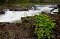 Photo of Nehalem Falls